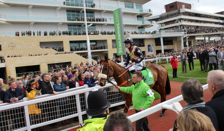 Horse in parade ring at Cheltenham Racecourse