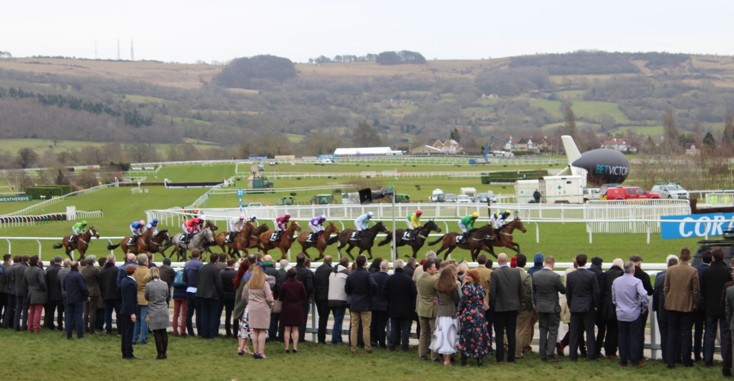 horses coming up the hill during a cheltenham race 1