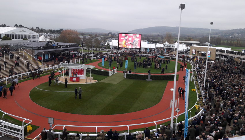 cheltenham parade ring