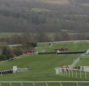 horses approach fence at cheltenham