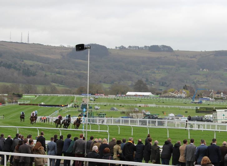 horse race at Cheltenham