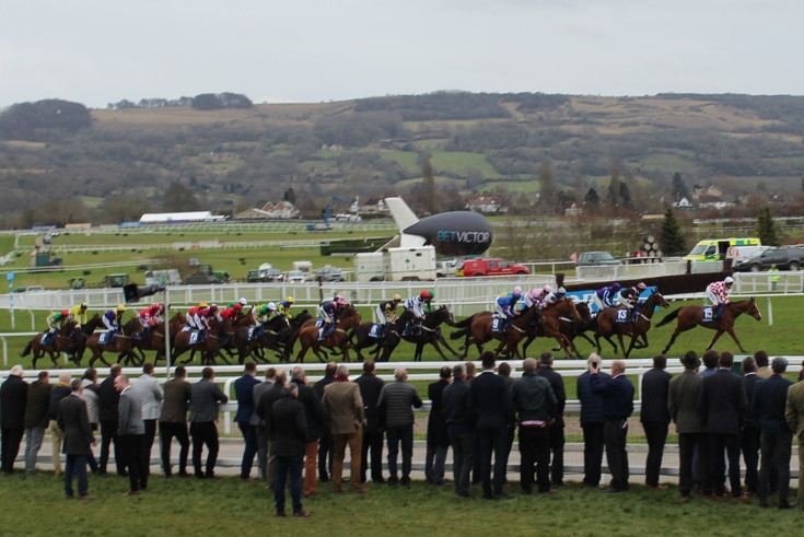 horses strung out into a line during the run of a cheltenham race