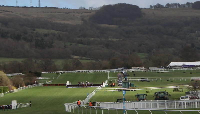 horses jumping cheltenham fence