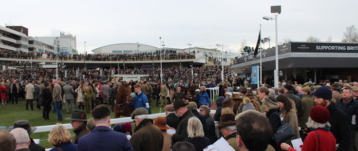horses going around the parade ring at cheltenham racecourse 1