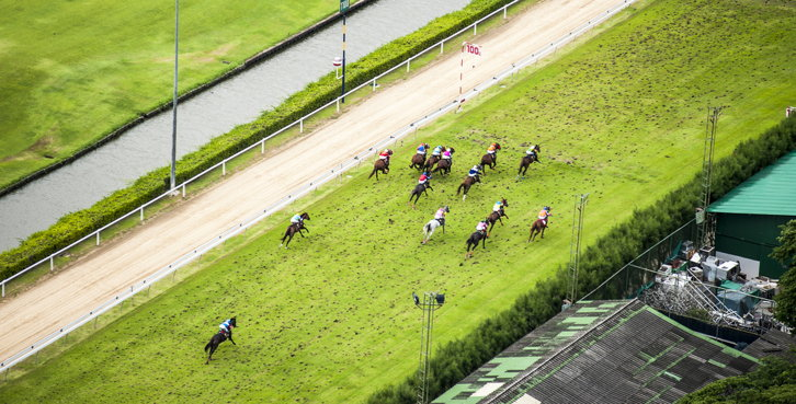Horse Race Viewed From Above